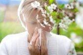 «Яндекс» запустил карту пыльцы для аллергиков