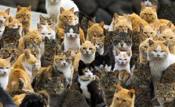 Калининградские пожарные спасли из огня пенсионерку и ее 20 кошек