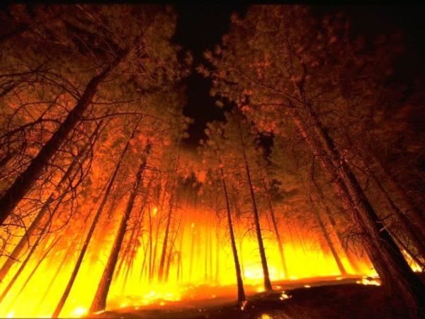 МЧС и эко-активисты призывают не допускать возникновения природных пожаров
