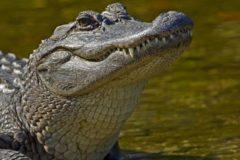 Священник из Ораниенбаума открыл при храме бесплатный зоопарк с крокодилами