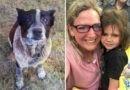 Трехлетнюю девочку искали всю ночь – ее спасла от смерти старая слепая собака