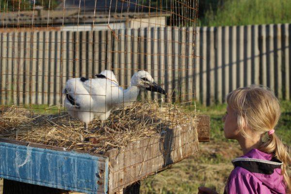 18 детей и аисты: Брянская многодетная семья создала приют для птиц