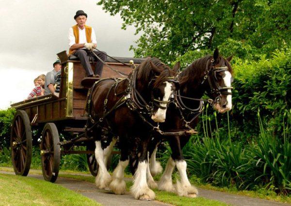 Немецкий священник на лошадях привезет в Великий Новгород «колокол мира»