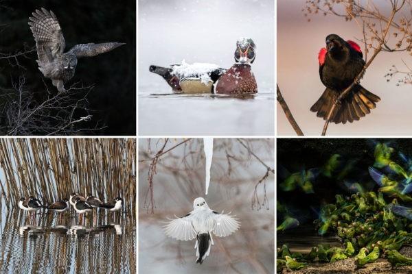 Лучшие фотографии пернатых конкурса Audubon Photography Awards 2018