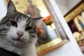 В Киеве погиб знаменитый церковный кот