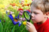 Посчитайте бабочек, сообщите о борщевике и отсмотрите галактики – ученым нужна ваша помощь
