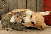 В подмосковном храме помолятся о бездомных кошках и собаках