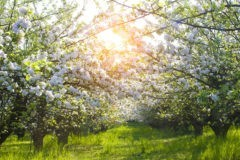 Федор Конюхов заложит сад в Ивантеевке – этим местом владели шесть Патриархов