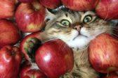 Три в одном и «яблочные чтения» – как можно провести Спасы, если следовать советам СМИ