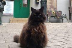 Из «Булгаковского дома» украли кота Бегемота