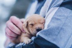 Ужасные люди, или Как я подобрала новорожденных щенков