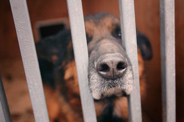 Перуанский болельщик вернулся в Россию за спасенной им бездомной собакой