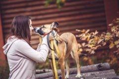 Жози, Лесси, Дуся, Лапа – счастливые жизни бездомных собак в наших руках