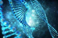 Информацию о геноме приравняют к персональным данным