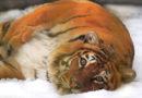 Человек уничтожил больше половины животных на Земле за последние 40 лет – WWF