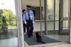 Курорт под Калининградом пригласил в гости бездомных котов из Японии, которых не пускают в музей