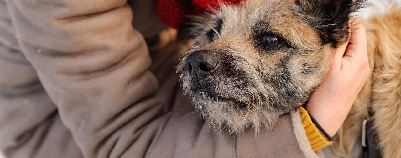 Старый, больной, на трёх лапах — приют в Кемерове держится лишь на любви к животным
