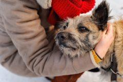 Старый, больной, на трёх лапах – приют в Кемерове держится лишь на любви к животным