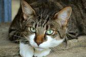 Житель Краснодара выбросил с балкона 15 кошек, ему грозит пять лет тюрьмы