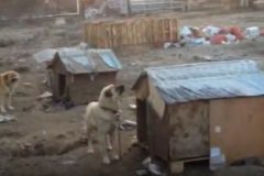 Зоозащитники спасли 40 собак, которых держали без еды и воды на подмосковном предприятии
