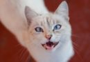 В Александро-Невской Лавре пройдет кошачий фестиваль