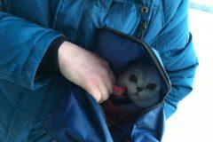 Зоозащитники и мэр Воркуты спасли кота, которого хозяйка все время держала привязанным к стулу