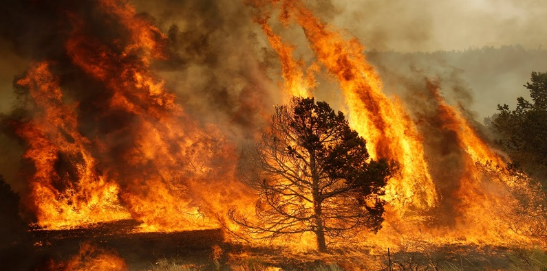 В России с начала года сгорело 7 млн гектаров природных территорий
