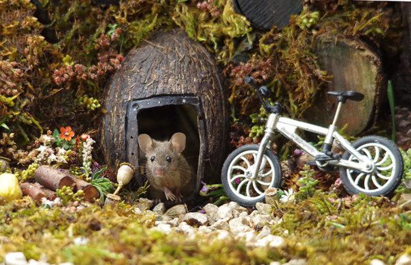 Мышонок Джордж, который живет в саду. Сказочные фотографии обычной мышиной семьи