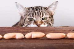 Сосиски не делают из кошек и бумаги — Роскачество