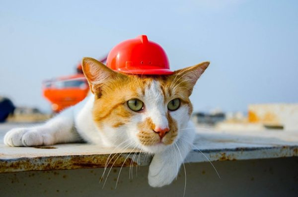 Ахилл из Эрмитажа, булгаковский Бегемот и крымский Мостик вошли в рейтинг популярнейших котов России