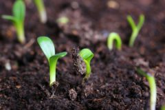 В России разрешат выращивать наркосодержащие растения в медицинских целях