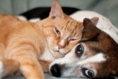 Госдума запретит отстрел собак и контактные зоопарки в ТЦ