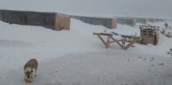 Под Казанью добровольцы помогли спасти засыпанных снегом собак из приюта