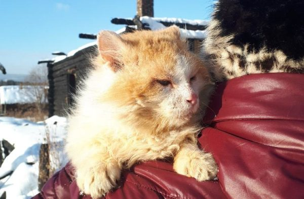 На Урале кот полтора года ждет погибших хозяев на месте сгоревшего дома