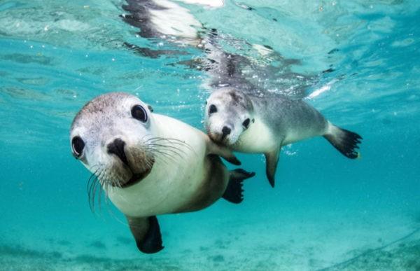 Любопытные котики и морской балет. 15 лучших снимков конкурса подводной фотографии
