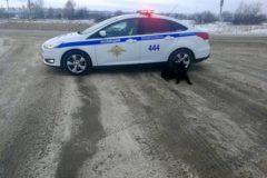 В Новокузнецке заблудившаяся собака пришла за помощью к полицейским