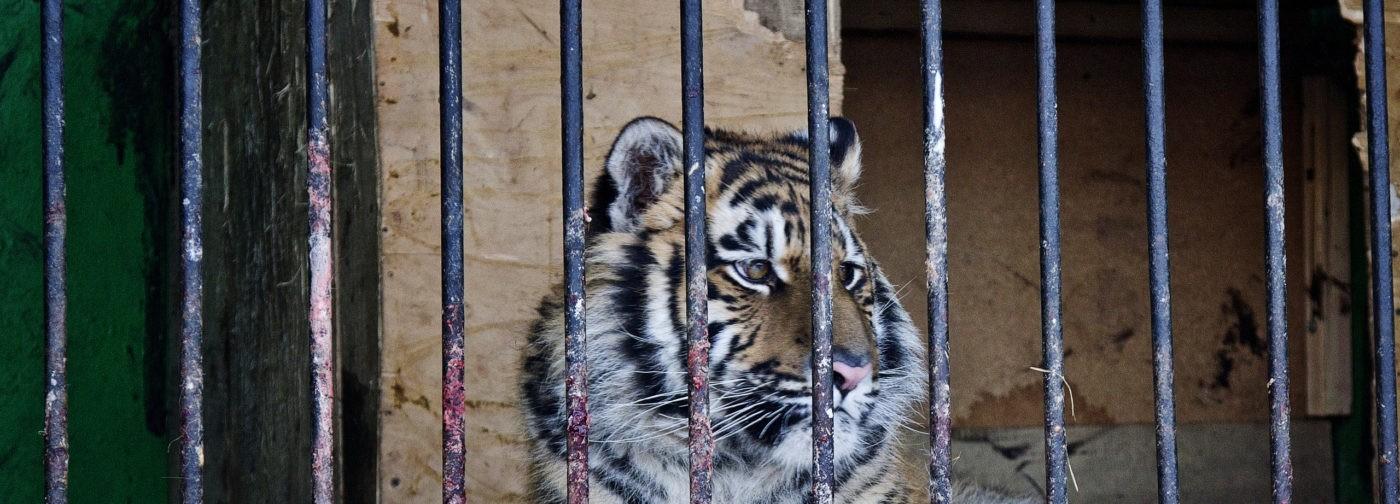 «Кто сказал, что животным холодно?» Хозяева зоолунапарка продолжают возить зверей по Башкирии