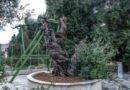 Русская миссия: Мамврийский дуб не упал, из него выросли два новых побега