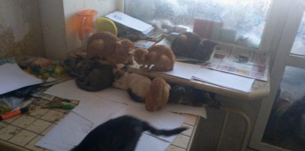 В Тюмени приставы нашли девочку в квартире с 30 кошками