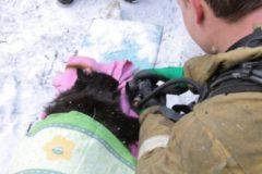 В Смоленске пожарные спасли из огня женщину и реанимировали ее кота