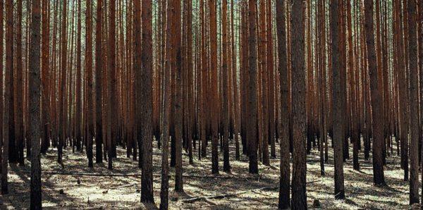 Счетная палата: В России с каждым годом увеличивается площадь погибших и поврежденных лесов