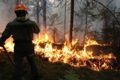 В Минприроды рассказали о неутешительном прогнозе по лесным пожарам этим летом