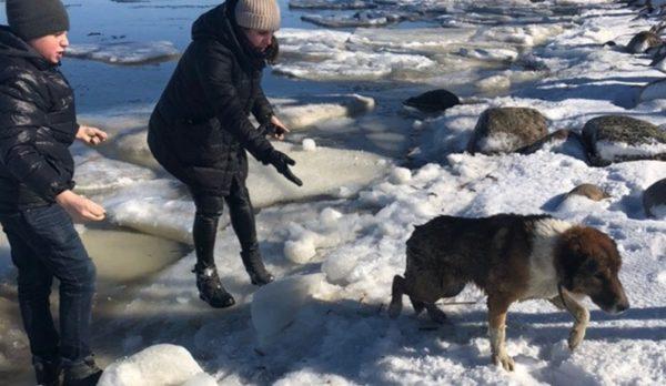 В Петергофе подросток спас собаку, провалившуюся под лед