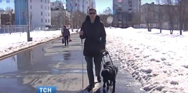 В Перми посетитель кафе избил инвалида и его собаку-поводыря