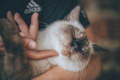 Российские ученые рассказали о разработке вакцины от аллергии на кошек