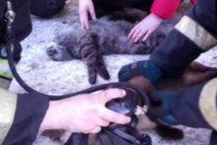 В Магадане наградили пожарных за спасение котов
