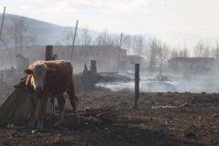В Забайкалье умер пастух, пострадавший во время степного пожара