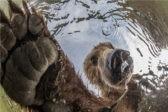 Танцы на кладбище, морской дракон и российский медведь. 11 лучших снимков со всей планеты (фото)