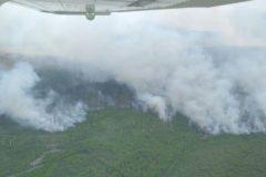 В Подмосковье загорелись 688 га лесов