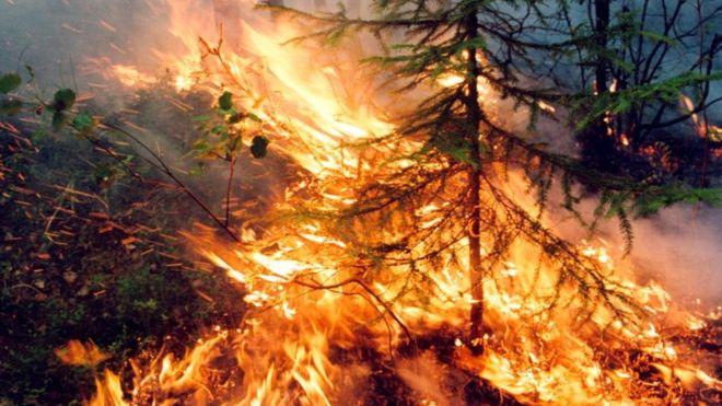 Пожар не тушили, и он стал неуправляемым. К чему приведет экологическая катастрофа в Сибири